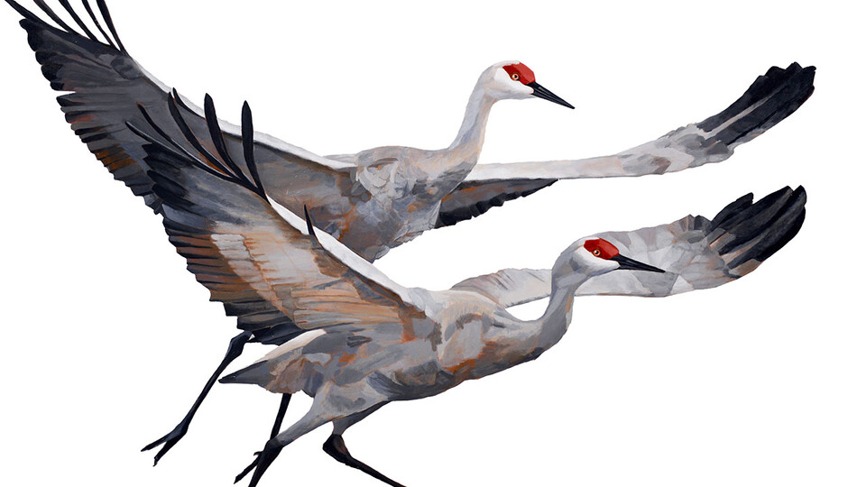 Museum's new exhibitions highlight Sandhill cranes, regional birds
